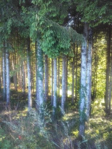 la crinère de la forêt.jpg