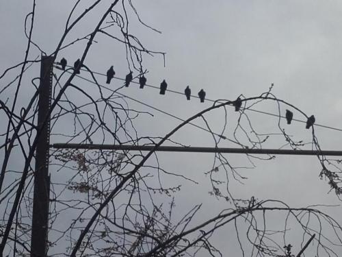 Les oiseaux de la Soie.jpg