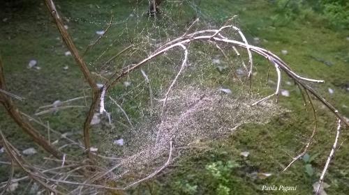 mes traces dans les arbres.jpg