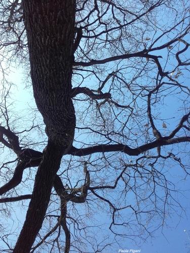 arbre 20 mars 2020.jpg