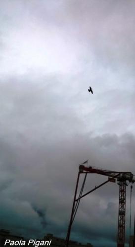 Oiseau grue.jpg